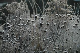 lifestyle winkel sfeerfoto's Elly Kloosterboer-Blok bloemen planten