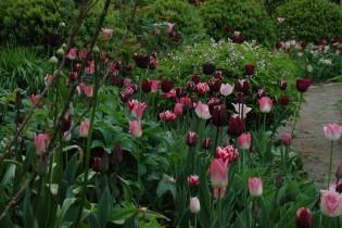 bezoekerstuin Goldhoorn Gardens