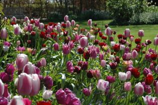 lifestylwinkelElly Kloosterboer-Blok bloemen planten