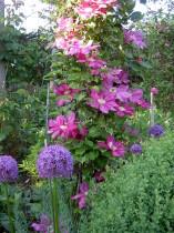 Goldhoorn Gardens tuinontwerp lifestyle tuin design Bant