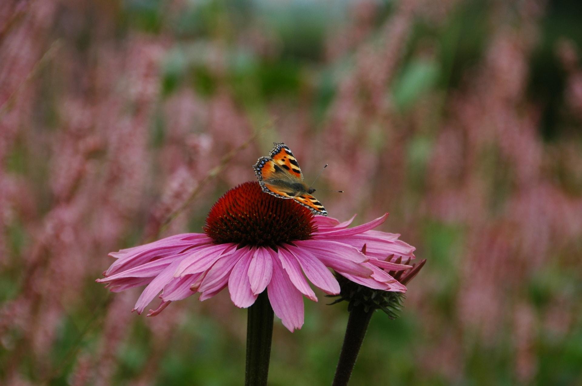 vlinderbloem-min